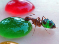 Different Types of Ants,The most common