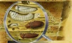 The World of Wood-Eating Insects