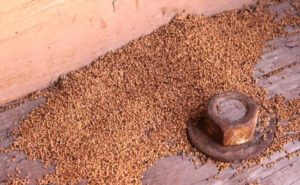 Termite Droppings,the first sign of a termite