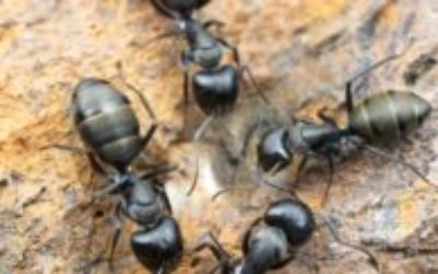 8 natural ways to Get Rid of Ants in the house