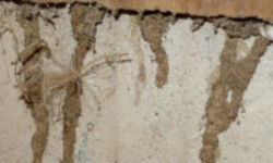 subterranean termites signs and damage