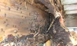 Termite Damage Pictures – Know the Signs